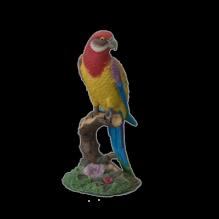 Попугай малый цветной