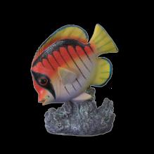 Рыбка 1