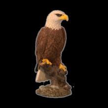 Орел на дереве