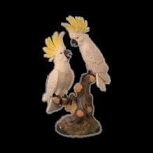 Два попугая белые